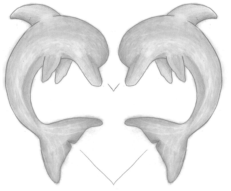 It is a picture of Unforgettable Dolphin Heart Drawing