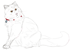 Mogget with white fur