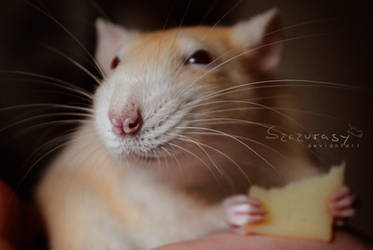Cheese-eater by szczurasy