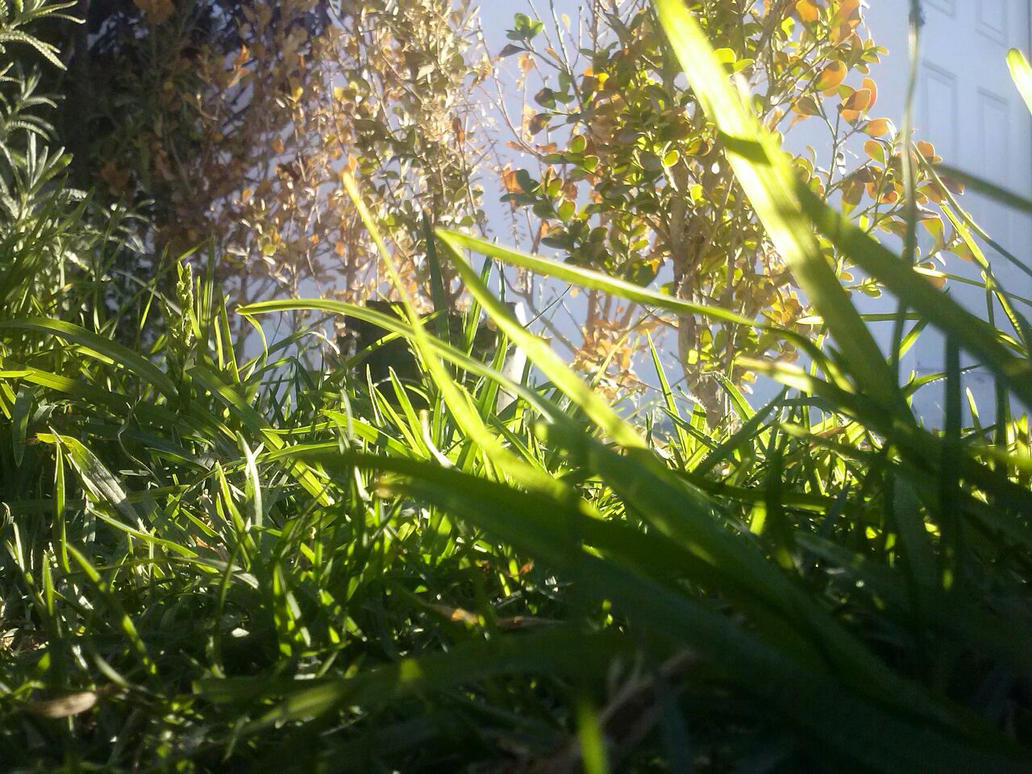 Grass by Andy1306