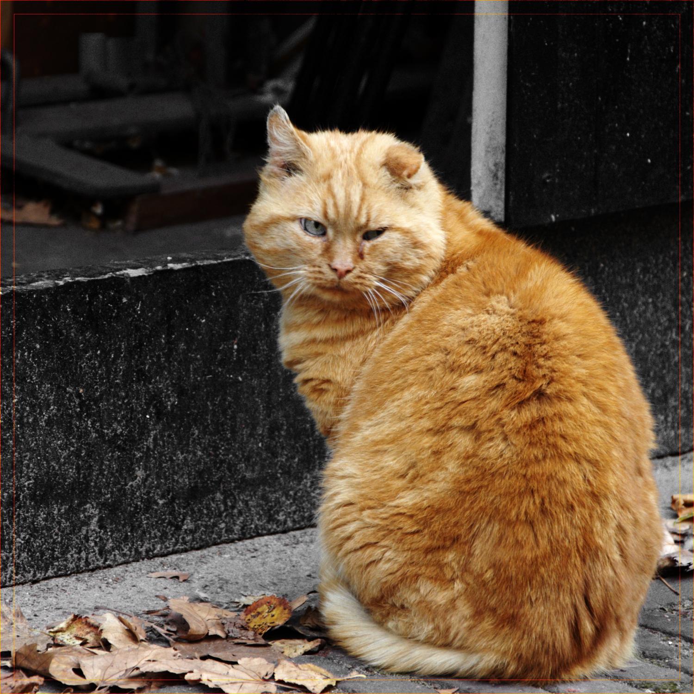 Autumn cat by hmdll