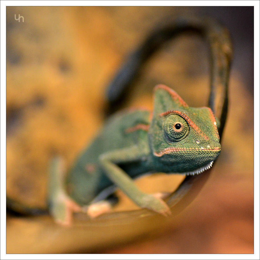 Autumn Chameleon by hmdll