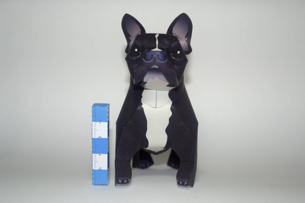 French bulldog papercraft by airasumi