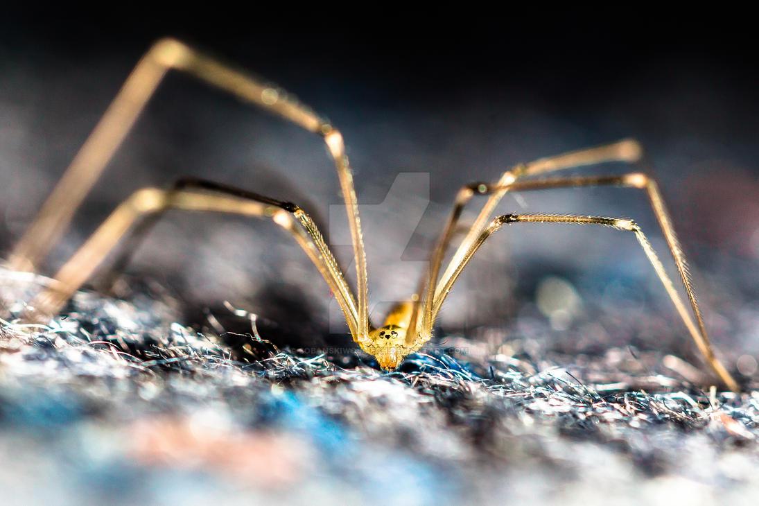 Lazy spider by SobanskiWojciech