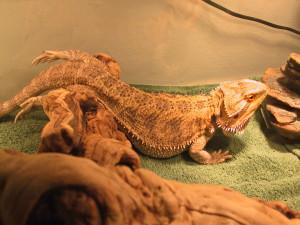 flashtail101's Profile Picture