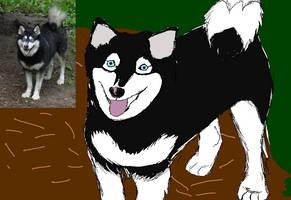 Mia the Husky Pup