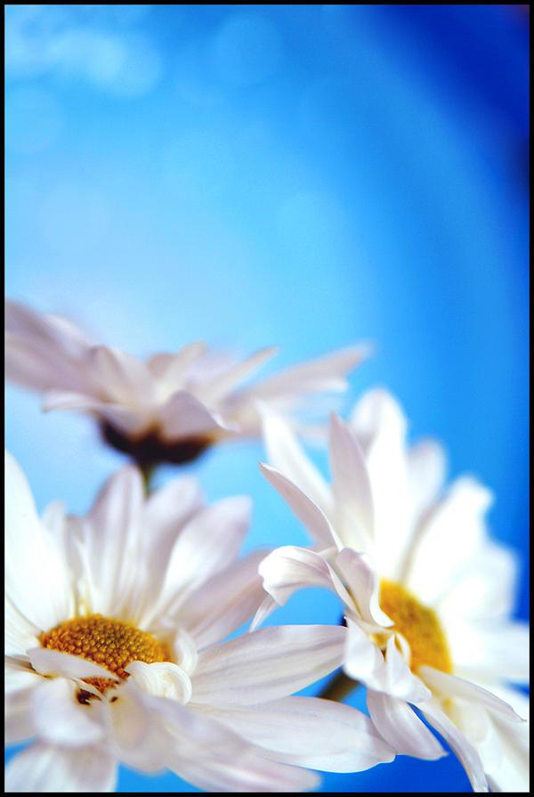 In A World of Paper Flowers by Kel-----Bel