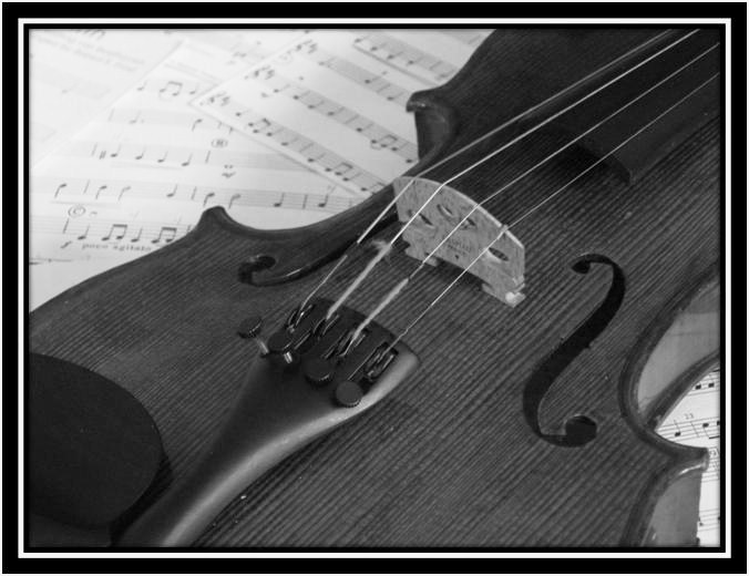 My Violin Black And White By