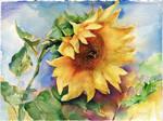 Sunflower with bumblebee by OlgaSternik