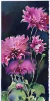 Chrysanthemums on a black background by OlgaSternik