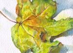 Autumn leaf. ACEO