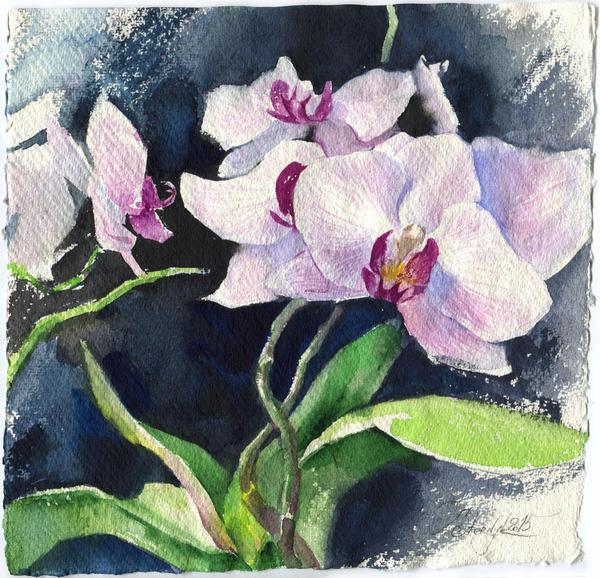 Orchid on black background by OlgaSternik
