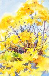 Sunny maple by OlgaSternik