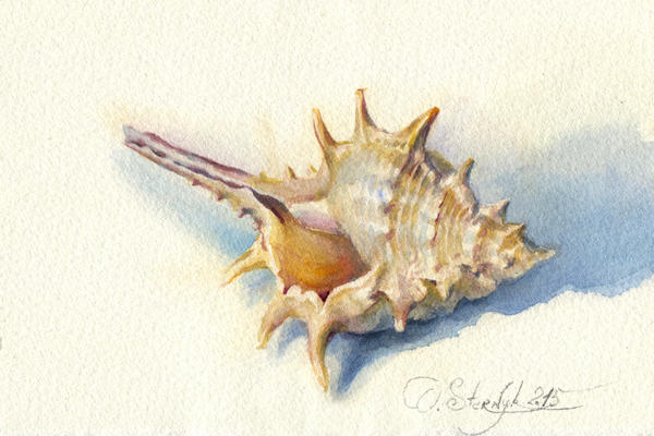 Crimea seashell by OlgaSternik