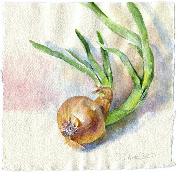 Onion by OlgaSternik