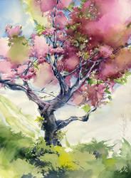 Cherry tree. Sakura by OlgaSternik