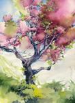Cherry tree. Sakura