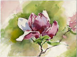 Magnolia flower. Plain air