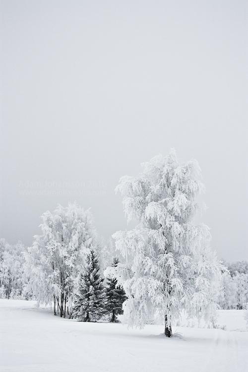 White by torvaldur