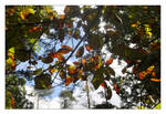 Fall Leaves 6 by scylla