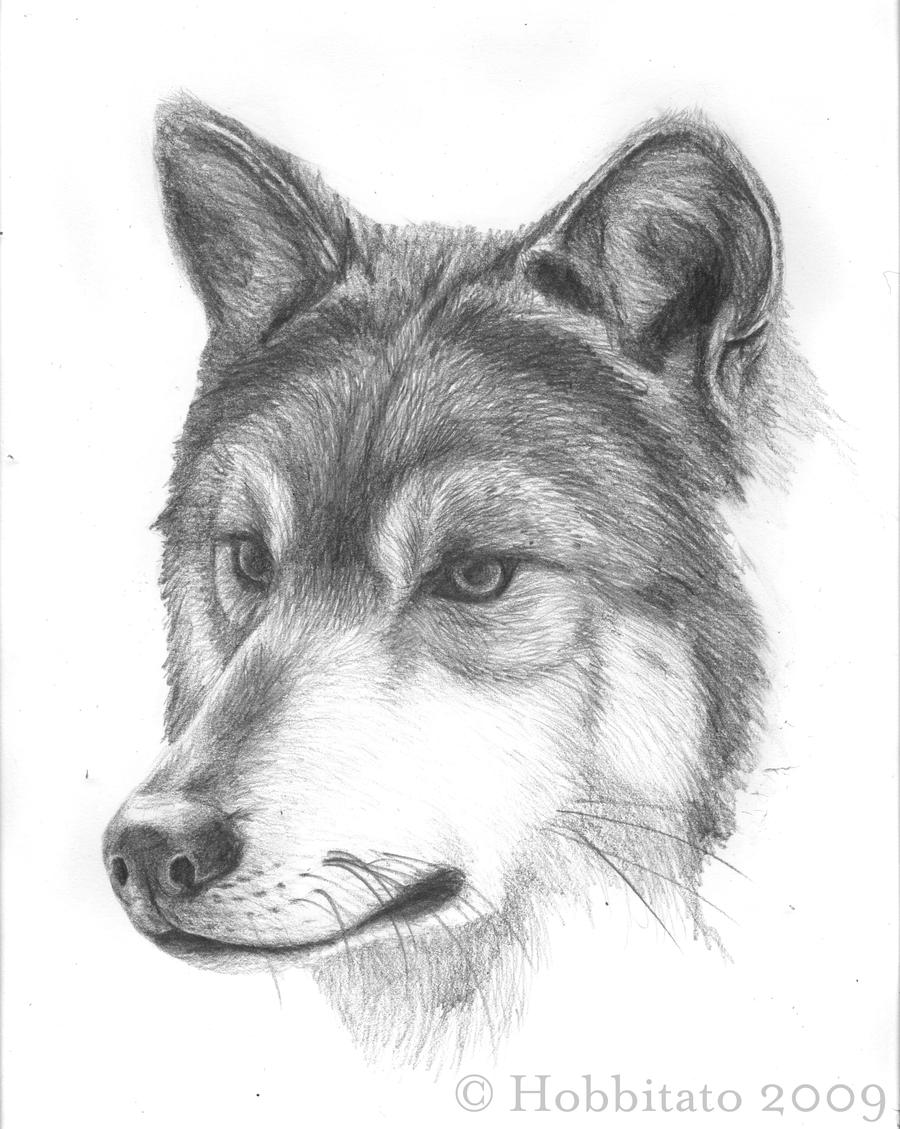 wolf pen chat Pennsylvania's source for breaking news, sports, entertainment and weather watch videos, view photos and join the discussion get headlines from across pa online at pennlivecom.