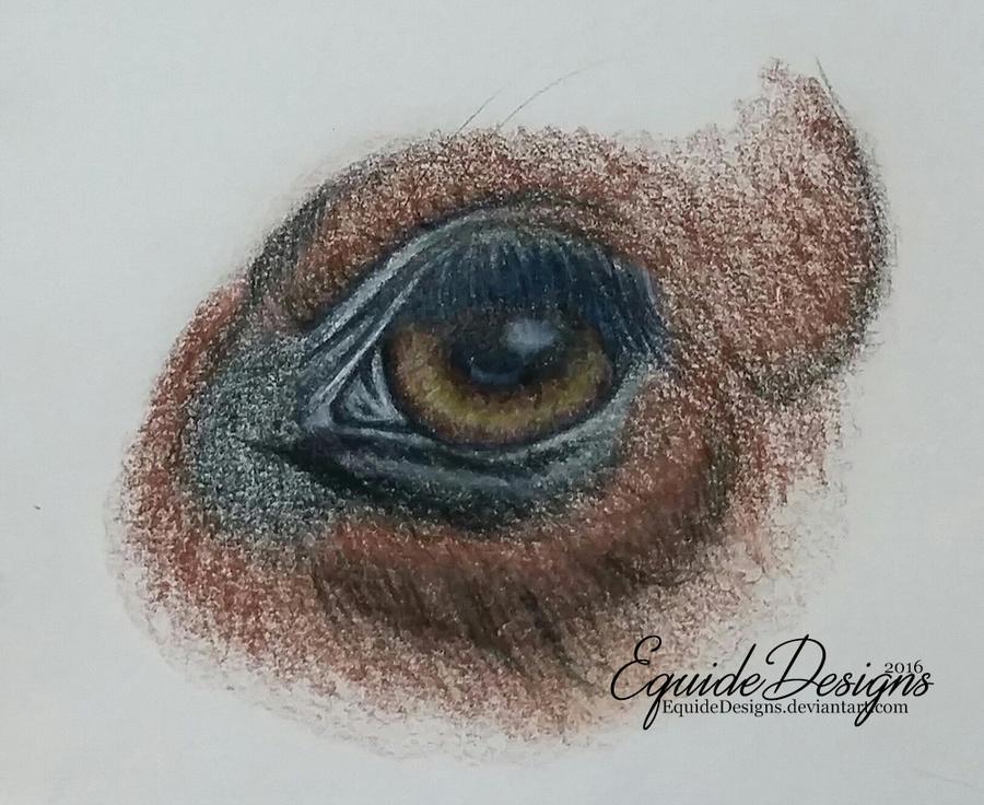 Horse Eye by EquideDesigns