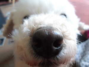CookieVampWolfNinja's Profile Picture