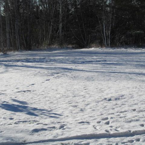 Snowfall 1` by A-Fox-Of-Fiction