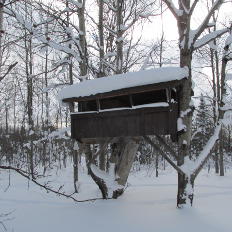 Hibernatng treefort by A-Fox-Of-Fiction
