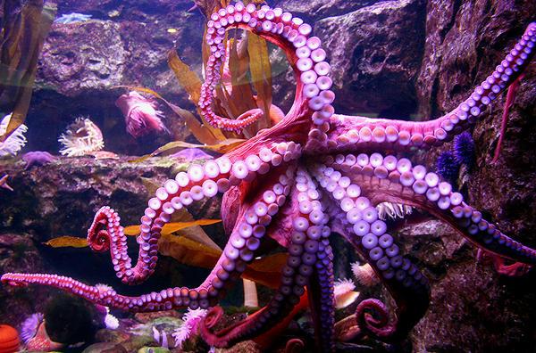 Octopus stock by idnurse41