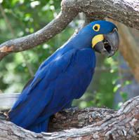 Parrot by idnurse41