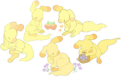 yellow blumaroo
