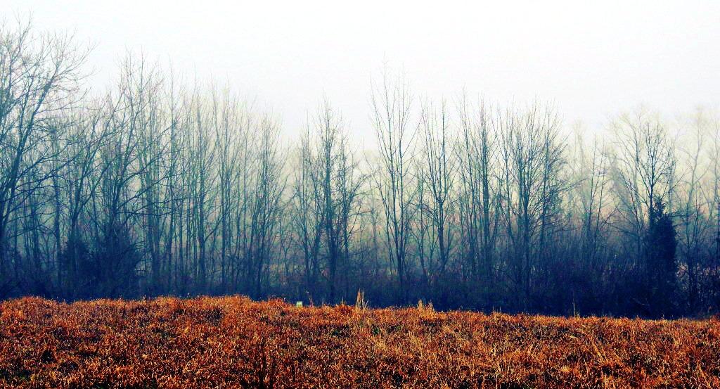 The Fog by TemariAtaje