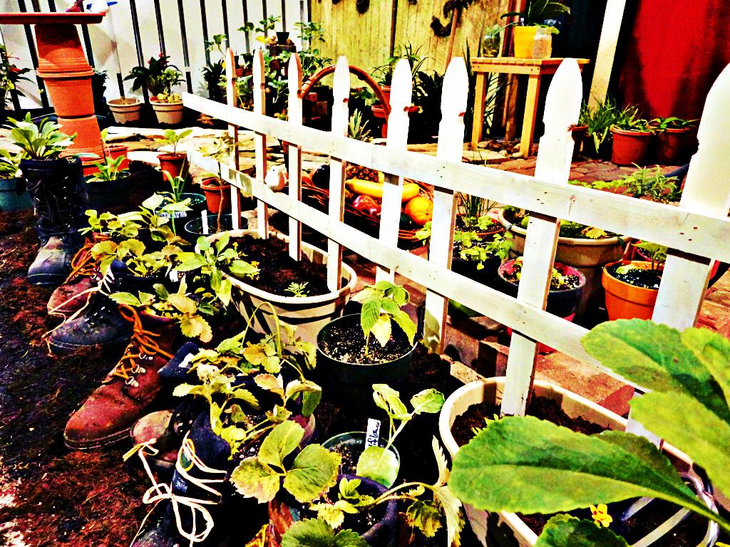 Boot Garden by TemariAtaje