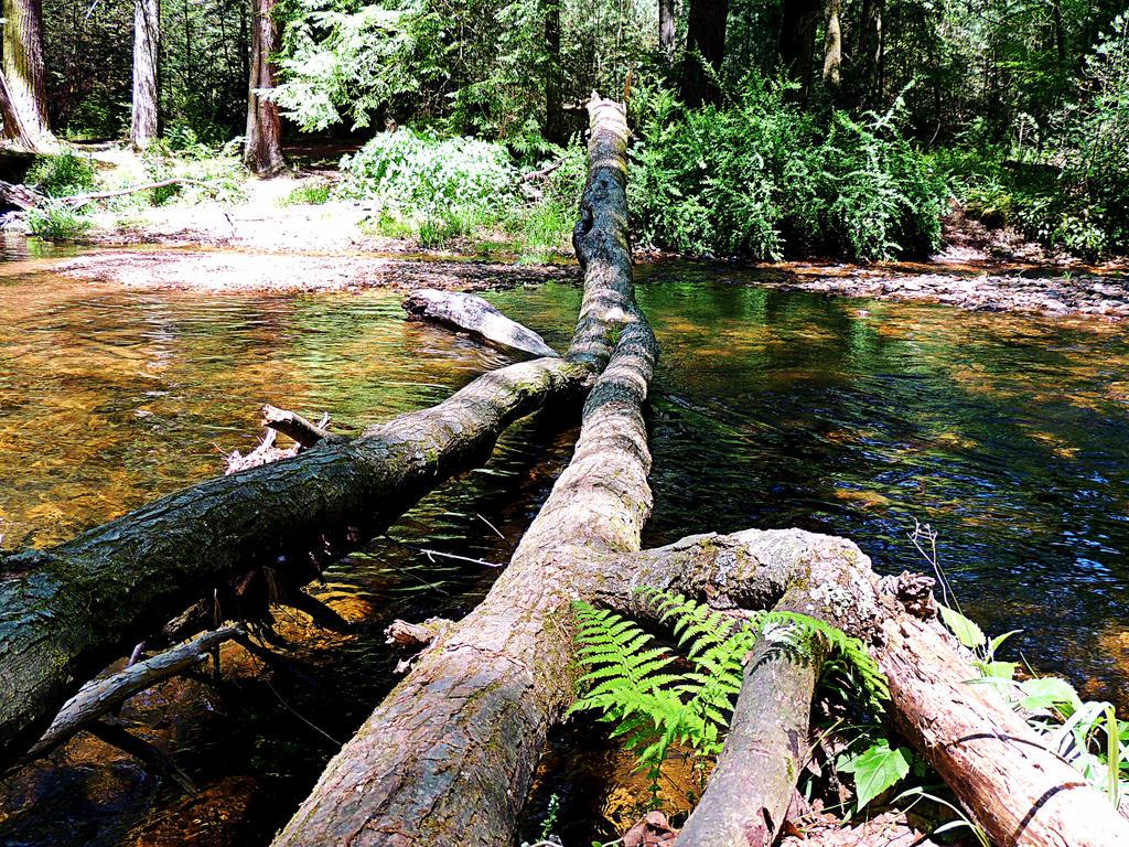 Creek Along The Appalacian Trail 03 by TemariAtaje