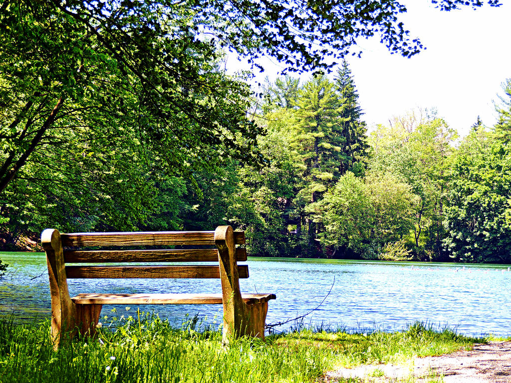 Bench At Fuller Lake by TemariAtaje