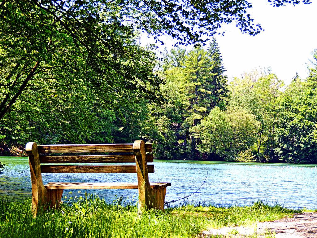 Bench At Fuller Lake by TemariAtaje