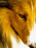 Dog eye by Oddesign