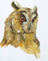 owl_head-study by Kule