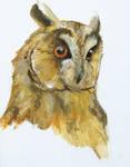 owl_head-study