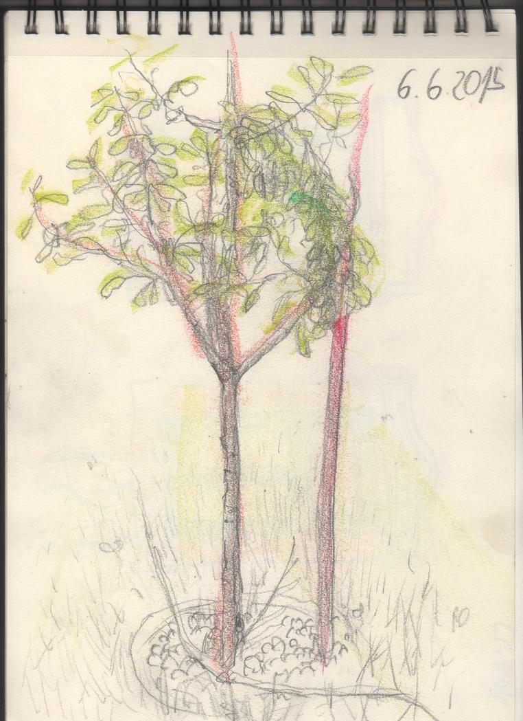 sapling by PixelLeaf