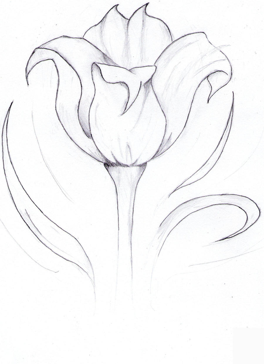 Tulip sketch by GokuKaji on DeviantArt