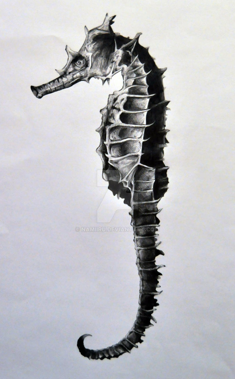 Seahorse Drawing by Namiiru on DeviantArt