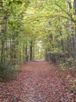 Autumn Walkway 001