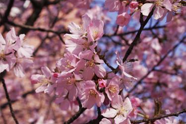 Spring-Flower-1 by wistine