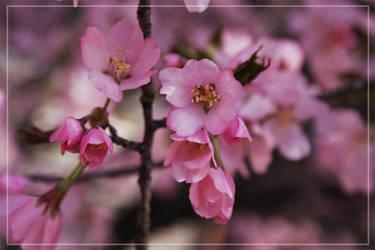 Spring-Flowers-2 by wistine