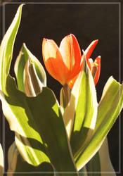 Orange color flower-2 by wistine
