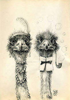 Mr and Mrs Ostrich