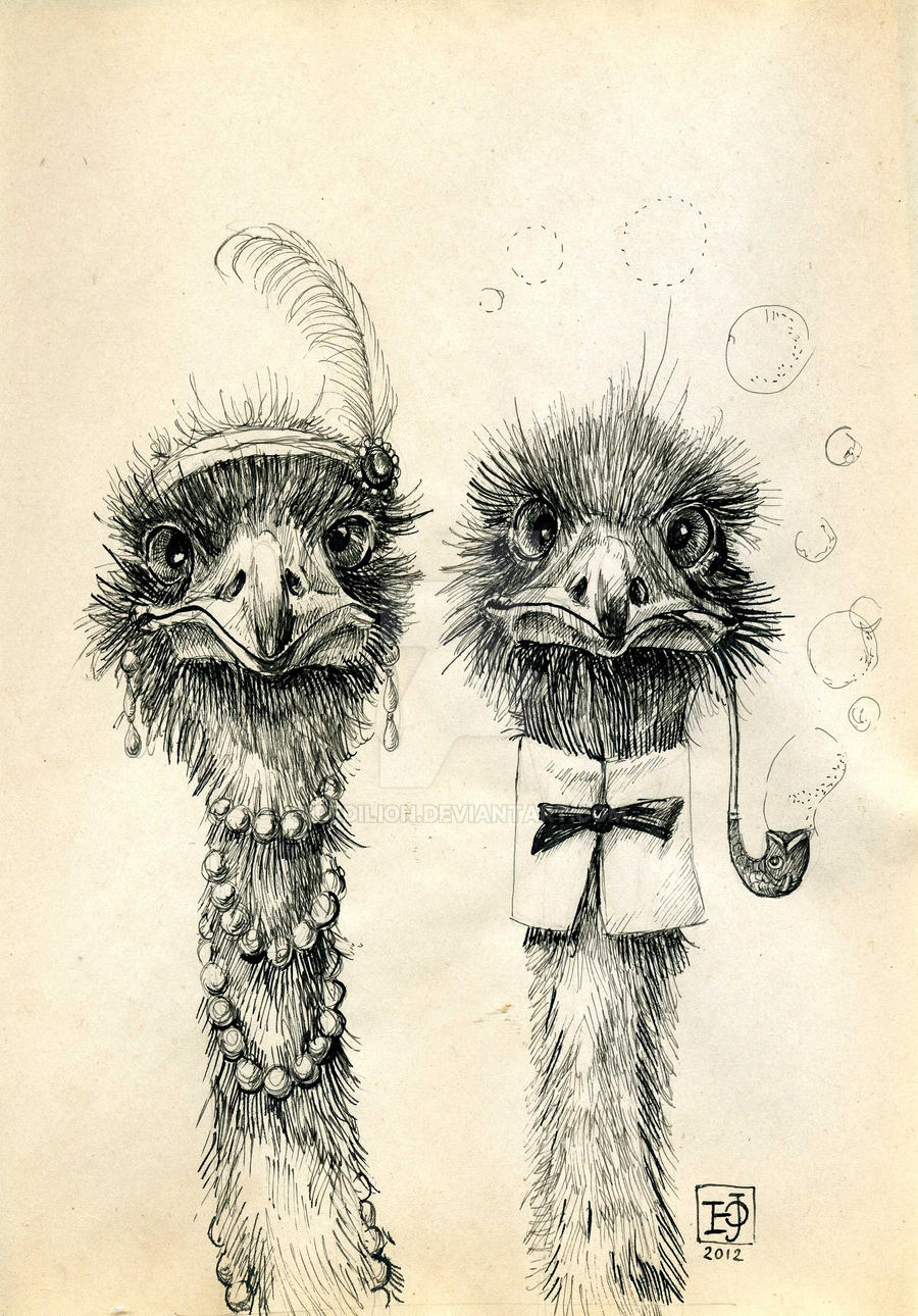 Mr and Mrs Ostrich by Redilion
