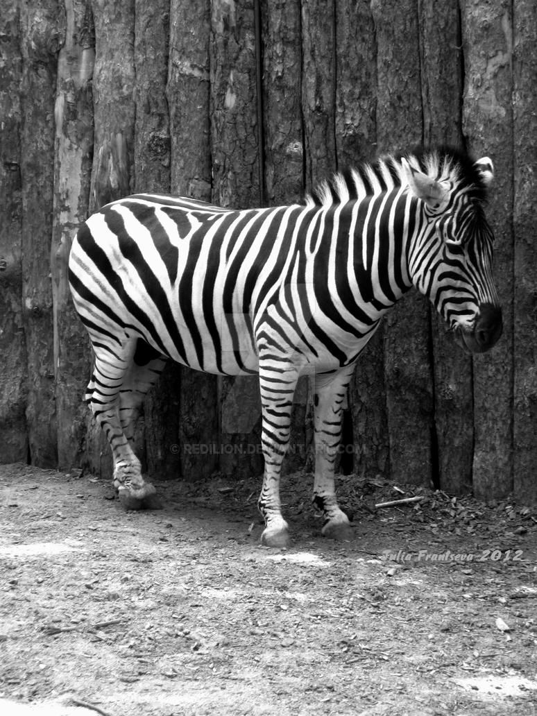 Stripes by Redilion